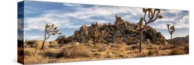 USA, California, Joshua Tree National Park, Panoramic View of Joshua Trees in the Mojave Desert