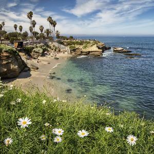USA, California, La Jolla. Springtime at La Jolla Cove by Ann Collins