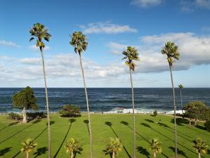 USA, California, La Jolla, Tall Palms at Scripps Park by Ann Collins