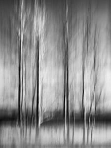 USA, California, Lake Tahoe, Abstract of Bare Aspen Trees and Snow at Carnelian Bay by Ann Collins