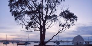 USA, California, Panoramic View of Eucalyptus Tree and Morro Rock at Sunset by Ann Collins