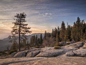 USA, California, Sequoia National Park. Sunset Near Beetle Rock Education Center by Ann Collins
