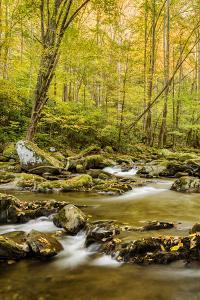 USA, North Carolina, Great Smoky Mountains National Park. Big Creek by Ann Collins