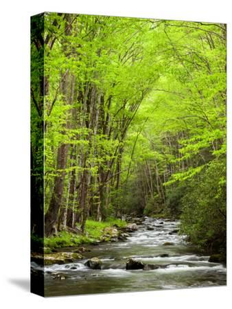 USA, North Carolina, Great Smoky Mountains National Park, Straight Fork Flows Through Forest