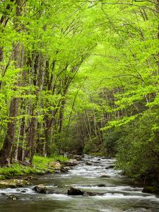 USA, North Carolina, Great Smoky Mountains National Park, Straight Fork Flows Through Forest by Ann Collins