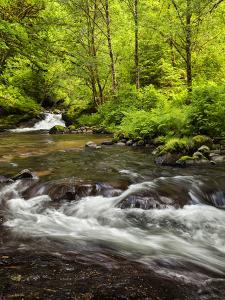 USA, Oregon, Siuslaw National Forest, Sweet Creek by Ann Collins