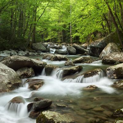 USA, Tennessee, Great Smoky Mountains National Park. Little Pigeon River at Greenbrier
