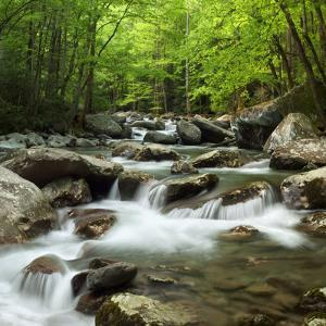 USA, Tennessee, Great Smoky Mountains National Park. Little Pigeon River at Greenbrier by Ann Collins