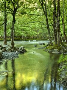 USA, Tennessee, Great Smoky Mountains National Park, Spring Reflections on Little Pigeon River by Ann Collins