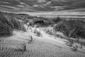 Washington, Long Beach. Dusk on the Beach Dunes by Ann Collins