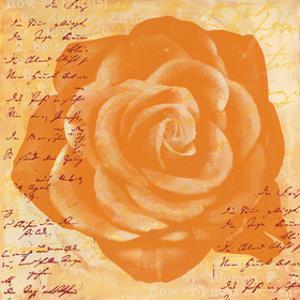 Orange Rose by Anna Flores