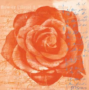 Rose in Orange by Anna Flores
