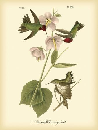 https://imgc.artprintimages.com/img/print/anna-hummingbird_u-l-pfr4al0.jpg?artPerspective=n
