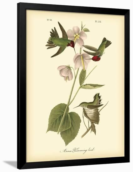 Anna Hummingbird-John James Audubon-Framed Premium Giclee Print