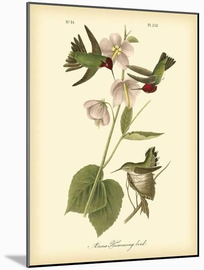 Anna Hummingbird-John James Audubon-Mounted Art Print