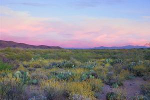 After Sunset in Saguaro National Park by Anna Miller