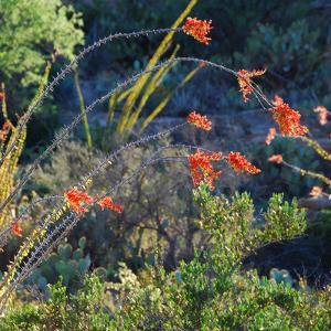 Arizona Desert Plants,USA by Anna Miller