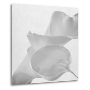 Black and White Calla Study by Anna Miller