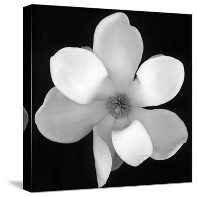 Black and White Magnolia Flower by Anna Miller