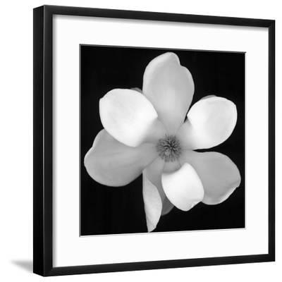 Black and White Magnolia Flower