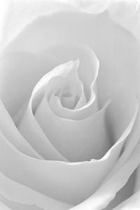 Beautiful flowers black and white photography artwork for sale black and white rose abstract mightylinksfo