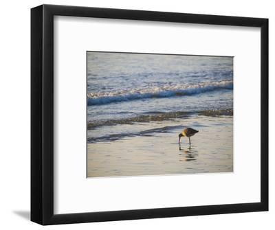 Coastal Bird, Morro Bay Coast