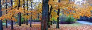 Fall foliage in Eagle Creek Park, Indianapolis, Indiana, USA by Anna Miller