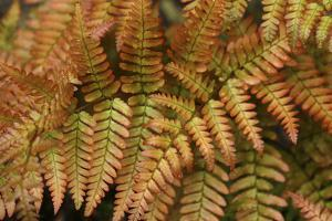Fern Leaf Close-up by Anna Miller