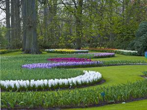 Flowebed Wiht Hyacinths, Keukenhof Gardens, Lisse, Holland by Anna Miller