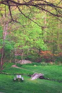 Fresh spreeng green leaves in the woods of Eagle Creek Park, Indianapolis, Indiana, USA by Anna Miller
