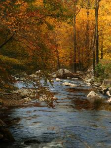 Golden foliage reflected in mountain creek, Smoky Mountain National Park, Tennessee, USA by Anna Miller