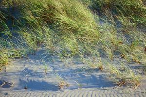 Grass on the sands of Lake Michigan, Indiana Dunes, Indiana, USA by Anna Miller