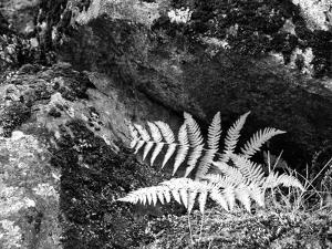 Hetch Hetchy Valley Flora, Moss and Fern by Anna Miller