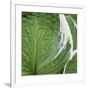 Hosta Leaf Closeup by Anna Miller