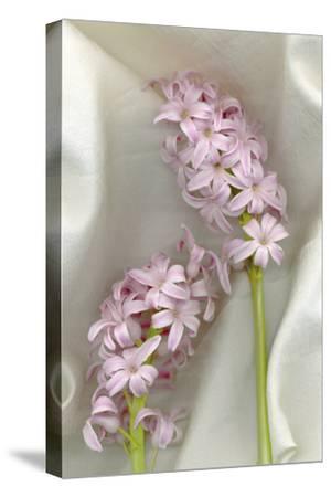 Hyacinth Study