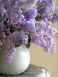 Lilac Flowers in Vase by Anna Miller