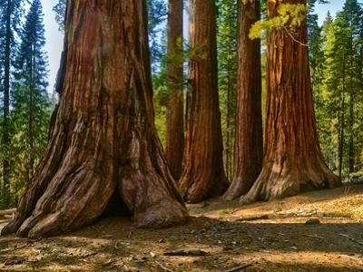 Mariposa Grove, Bachelor and Three Sisters, Yosemite