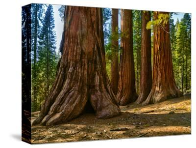 Mariposa Grove, Bachelor and Three Sisters, Yosemite