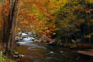 Mountain creek with fall colors, Smoky Mountains, Tennessee by Anna Miller