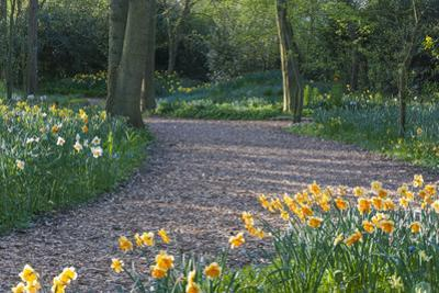 Path Thru Wooded Garden with Daffodils by Anna Miller