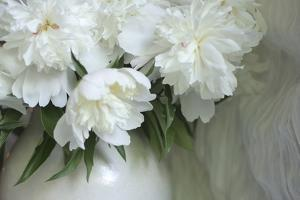 Peony by Anna Miller