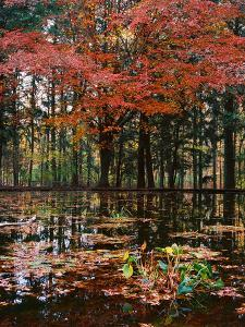 Red leaves over pond, Eagle Creek Park, Indianapolis, Indiana, USA by Anna Miller