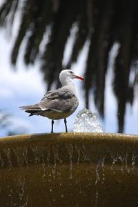 Seagul on Sausalito Fountain, Marin County, California by Anna Miller