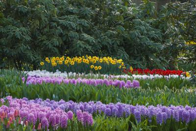 Spring Flower Garden with Daffodils, Tulips and Hyacinth by Anna Miller