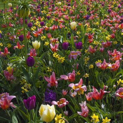 Spring Flowerbed with Tulips, Daffodils and Hyacinth by Anna Miller