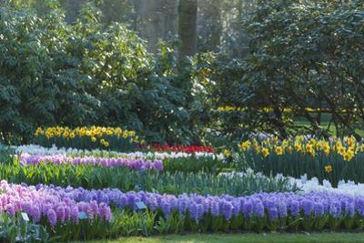 Sunlit Spring Garden with Hyacinth and Daffodils by Anna Miller
