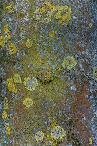 Tree Bark with Moss and Lichen by Anna Miller