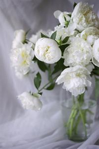 White Peonies in a Vase by Anna Miller