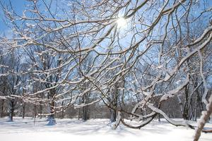 Winter in Eagle Creek Park, Indianapolis, Indiana, USA by Anna Miller
