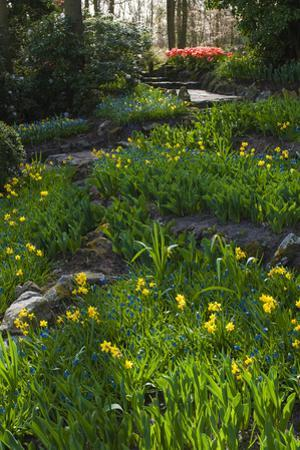 Woodland Spring Garden with Daffodils by Anna Miller